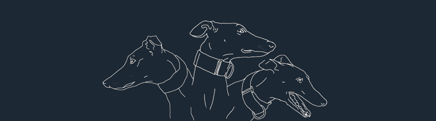 illustration, greyhound, galgo, free-the-galgo, pets-not-bets, cayetana-mate